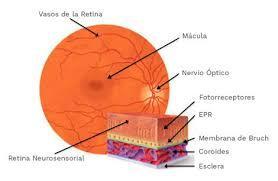 deslocamento-de-retina-neo-1